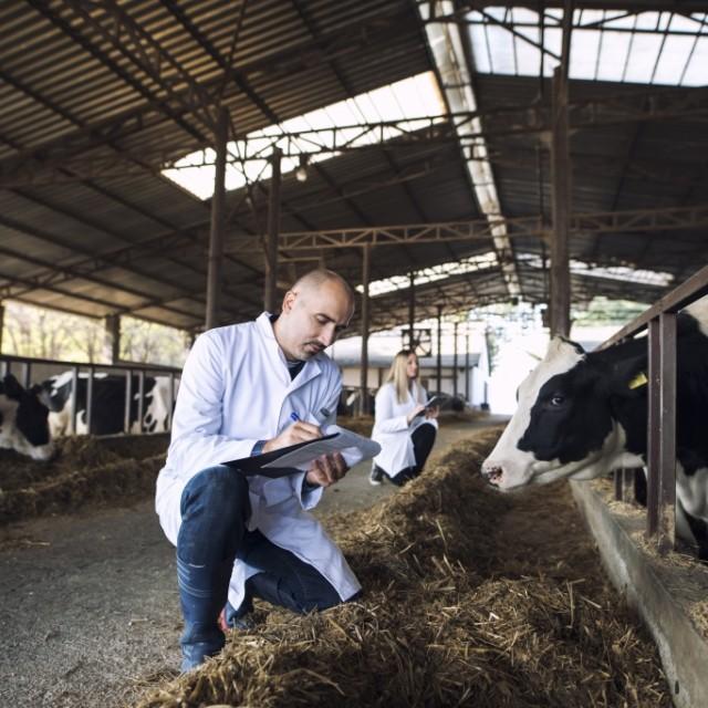 Servicios de emergencias y mantenimiento programado en plantas de ordeño