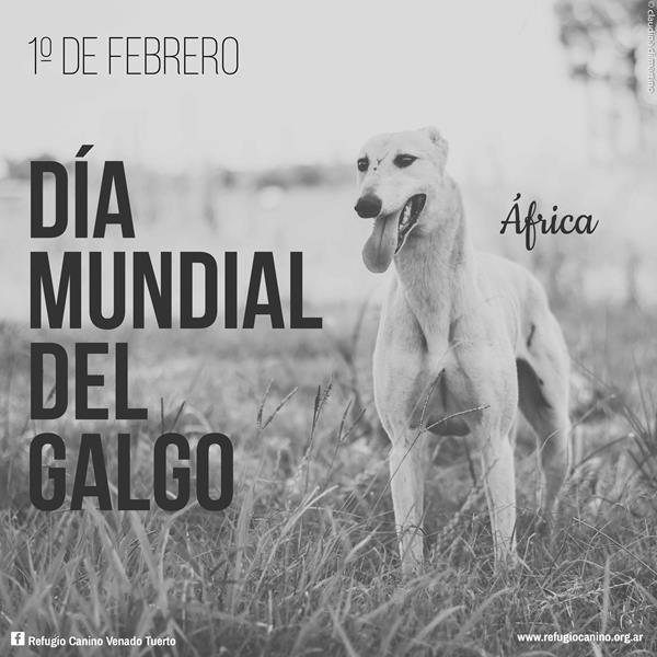 GALGOS GUAU, REFUGIO CANINO VENADO TUERTO, venado tuerto