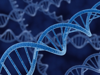 Venta de genetica, CABAÑA UNELEN, venado tuerto