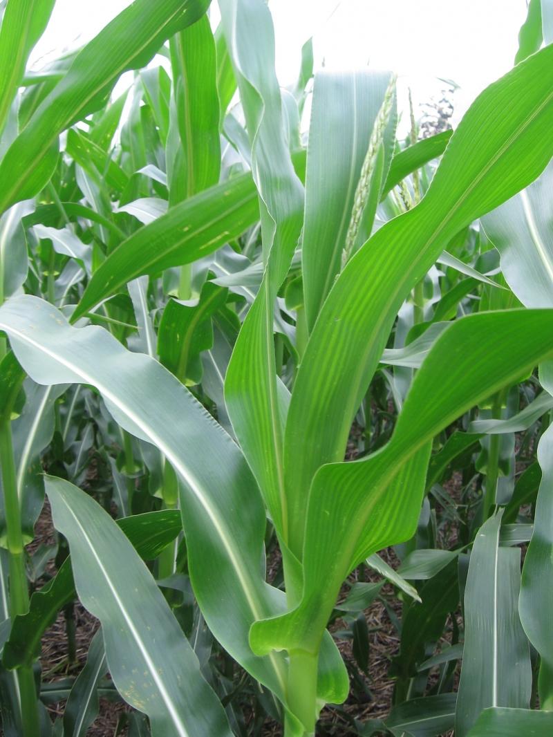 Fertilizantes y nutrición de cultivos, ESTUDIO AGRONOMICO, venado tuerto