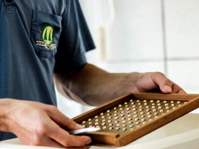 Control de calidad de semillas, ESTUDIO AGRONOMICO, venado tuerto